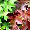 De herfst is boordevol geur en kleur in de tuin.