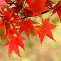 Prachtige herfstkleuren in oktober met de verkleurende bladeren van allerlei loofbomen.