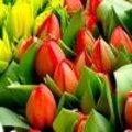 Valentijn vieren met een boeket tulpen