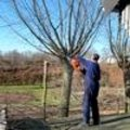 Tuinklussen in februari: snoeien, planten en tuinonderhoud