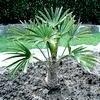 Verzorging van uw exotische planten na hun winterrust