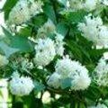 Witte bloemenweelde in de tuin