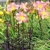 De mooiste plantencombinaties: contrast, vormen, ton sur ton,...