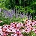 Bloei in de tuin week 32