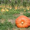Maand 09 - september: de herfstmaand.