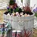 Bloembollen in potten planten