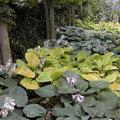 Vaste planten voor in schaduw