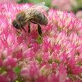 Bijen helpen