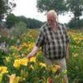 Hemerocallis: lekkere lelies!