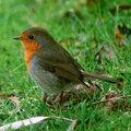 Vogels voeren en beloeren 2011