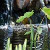 Vijveropstart voorjaar: vijverbacteriën