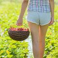 Zomerfruit uit eigen tuin: lekkere aardbeien kweken