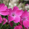 Aangenaam geurende bloemen en planten
