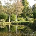 Herfst in het arboretum van Kalmthout