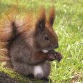 Eekhoorns in de tuin