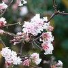 Winterbloeiers: wintermooi met winterse bloemen
