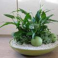 Bloemschiktrends: de plantenschaal is weer helemaal in!