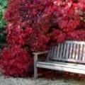 Prachtige herfstkleuren