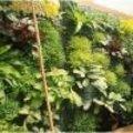Verticaal tuinieren plantenkeuze