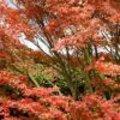 Herfstkleuren in de tuin
