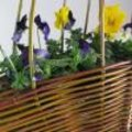 Wilgentenen voor lentebloemen