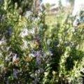 Kruiden die bloeien in mei