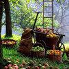 Tuintip -  oktoberklussen in het verschiet