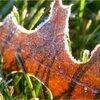 Tuinieren half november: planten beschermen tegen vorst en dahliaknollen bewaren, Overzicht van tuintaken voor komende week