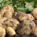 Al aan uw aardappelen gedacht?