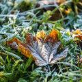 Tuintip -   Koning winter houdt het voorlopig bij nat!