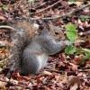 Natuurfoto's: Eekhoorntjes in de tuin in Sussex