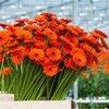 Snijbloemen en planten in pot op een milieuvriendelijke manier