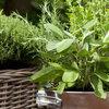 Kweek zelf groenten en kruiden in pot voor de keuken