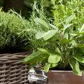 Groenten en kruiden kweken