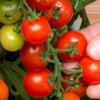 Pluk binnenkort je eigen tomaten