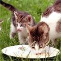 Voeding voor je kat