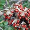Soorten giftige planten voor mensen