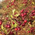 Siervruchten kleuren de herfst