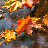 Vijverkalender: de vijver in oktober