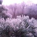 Over de eerste sneeuw, knotwilgen en vogels tellen