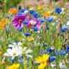 Haal lieveheersbeestjes en vlinders in je tuin!