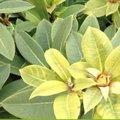 Hebben je planten gele bladeren?