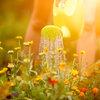 5 watertips voor de dorstige tuin