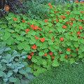 Polycultuur zorgt voor een gezondere tuin!