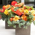 De mooiste zomerbloeiers voor je bloembakken