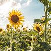 Maak jouw tuin regen- en hittebestendig