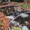 Eind oktober, begin november: blaadjes scheppen of een net erover, vijvernet tegen vallende bladeren, bladeren scheppen uit de vijver, vijveronderhoud in het najaar, najaarsonderhoud vijver