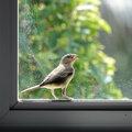 Geen vogels meer tegen je raam