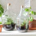 Groen in een fles - een terrariumfles maken
