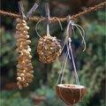 Het juiste vogelvoer in verschillende smaken